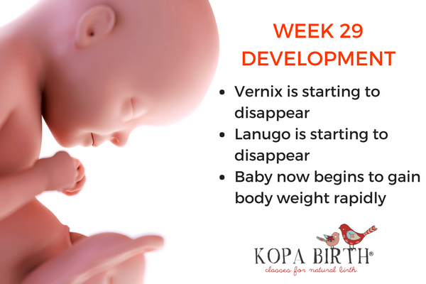 Week 29 Pregnancy 3d Weight Amp Symptoms Kopa Birth 174