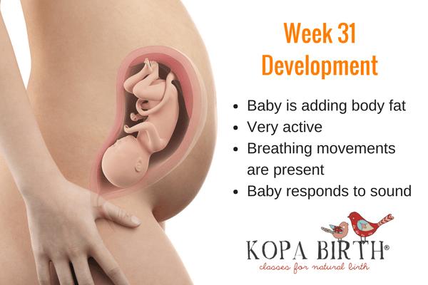 Fetus At 31 Weeks Pregnant